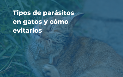 Parásitos comunes en gatos
